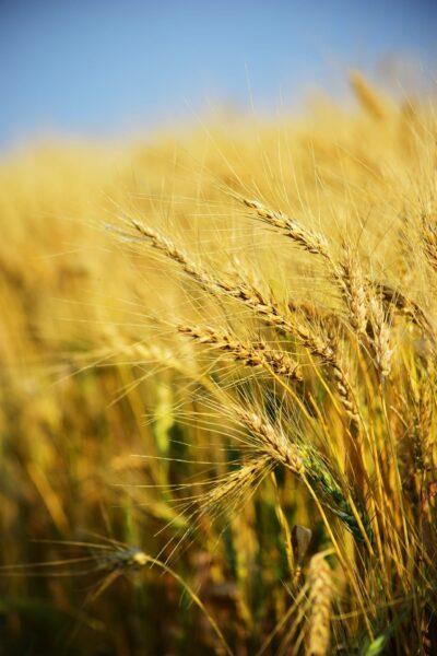 Spécialiste de semences agricoles-Hauts de France-Réf.13314
